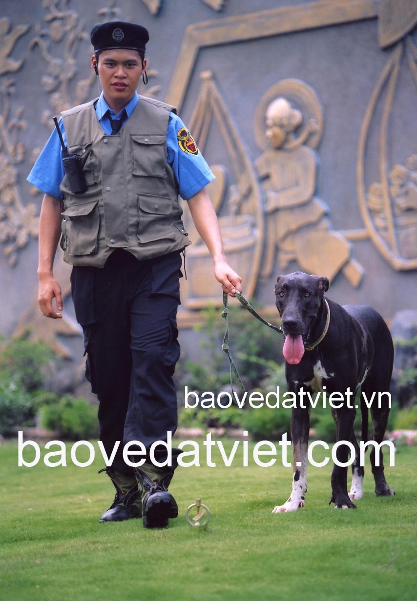 công ty dịch vụ bảo vệ Đất Việt