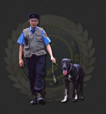 Công ty bảo vệ Đất Việt tuyển dụng bảo vệ cho tháng 3